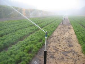 Купить систему полива лесного питомника